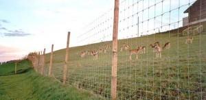 Rural Fencing: Livestock or Hinge Joint