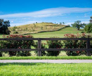 Treated Pine Rural Fence Painted Rail