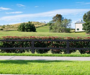 Treated Pine Rural Fence - Painted Rail Sideview